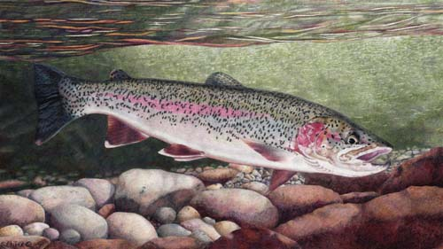 Featured artwork at Madison-Gallatin Trout Unlimited 2008 Annual Banquet